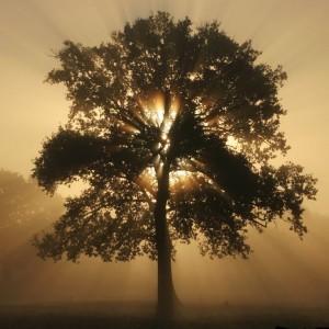 arbre_2