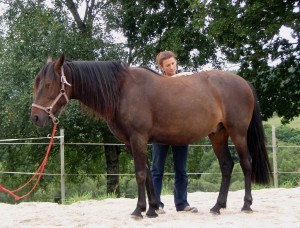 Mustang mlrosteo